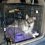 Med hund i hundebur på tur